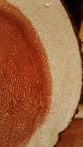 三河杉原木、良材入荷
