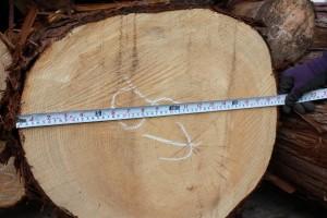 桧原木、丸太末口48cm